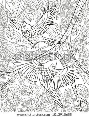 Bird Color Book Vector Black White Stock Vector 1013910655 ...