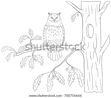 owl in a tree coloring page - owl tree stock images royalty free images vectors