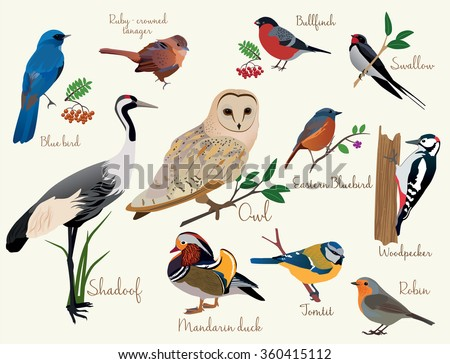 bird icons. Colorful realistic birds icons set isolared. birds, birds, birds, birds, birds, birds, birds, birds, birds, birds, birds, birds. - stock vector