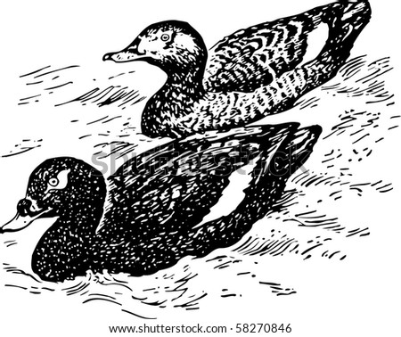 Ducks In A Line Stock Images Royalty Free Images