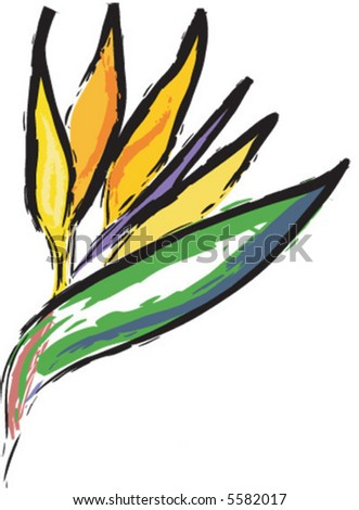 Bird of Paradise flower illustration - stock vector