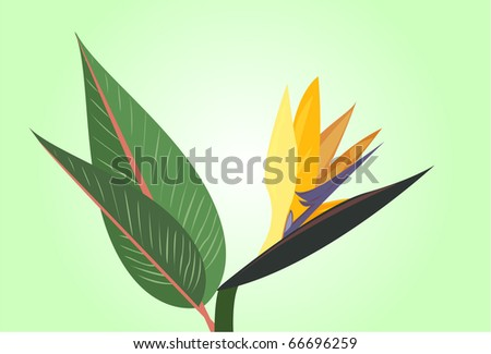 Bird of Paradise flower on a green background. - stock vector