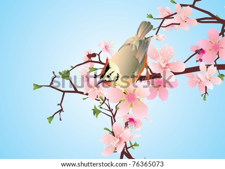 bird on the blossoming cherry detailed vector - stock vector