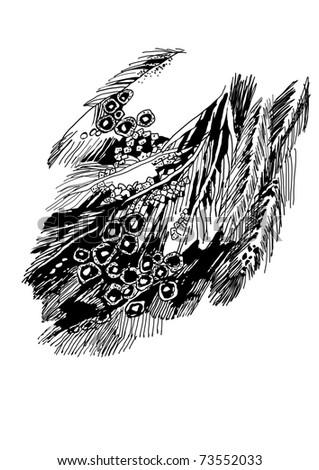 bird's feather - stock vector