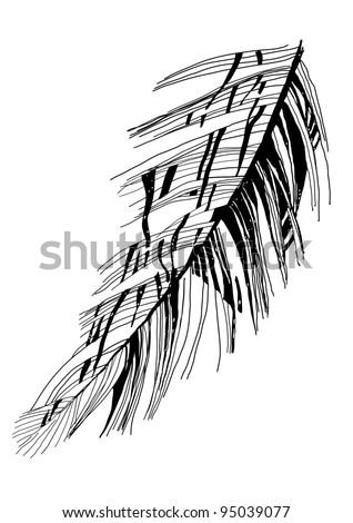 bird's feather graphic vector sketch - stock vector