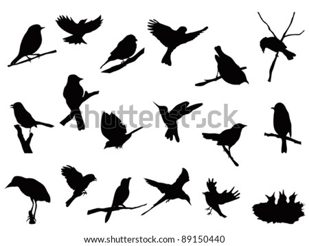 bird silhouettes collection - stock vector