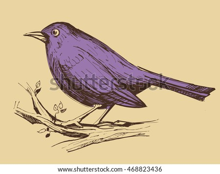 Bird sketch. Vector illustration