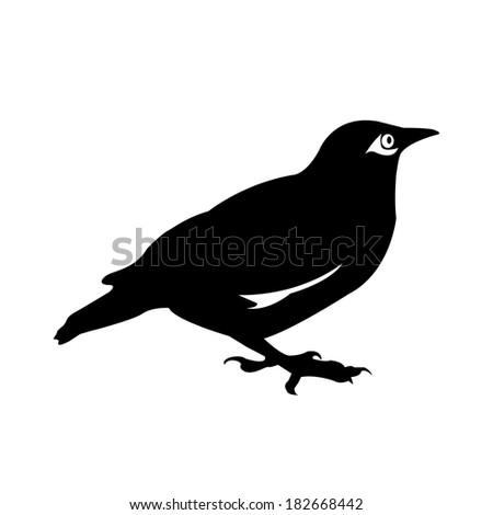 bird vector - stock vector