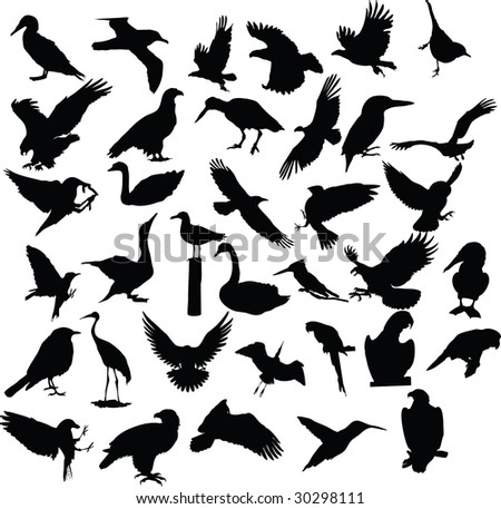 bird, vector, silhouette