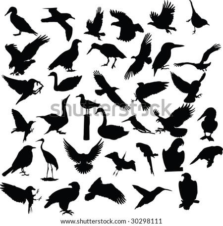 bird, vector, silhouette - stock vector