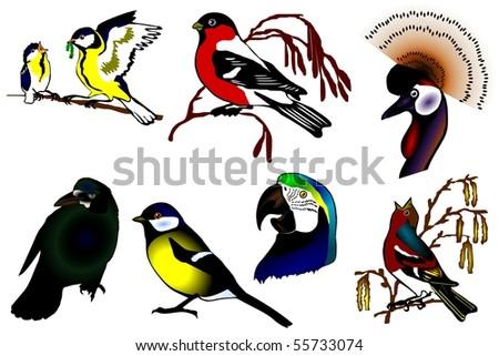 birds color collection vector eps10 - stock vector