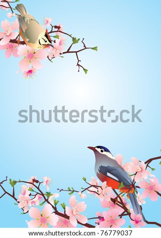 birds on the blossoming cherry detailed vector - stock vector