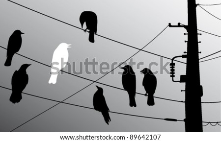 Birds on the wires - stock vector
