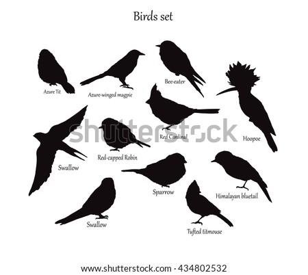 Birds set, animal wildlife vector illustration.Vector Illustration isolated birds. birds flying, animals, bird silhouette, bird vector - stock vector