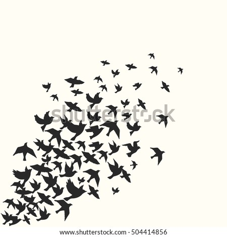 Birds silhouette vector background