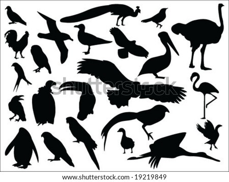 Birds silhouettes vector collection
