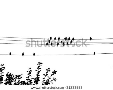 birds to waxwings on wire. vector - stock vector