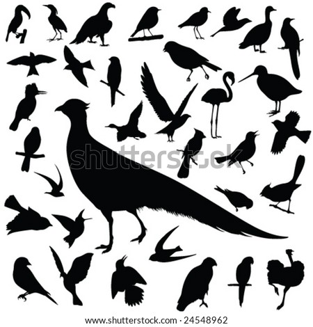 Birds-vector - stock vector