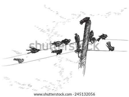 Birds. Vector  background of birds Silhouettes on electrical wires   - stock vector
