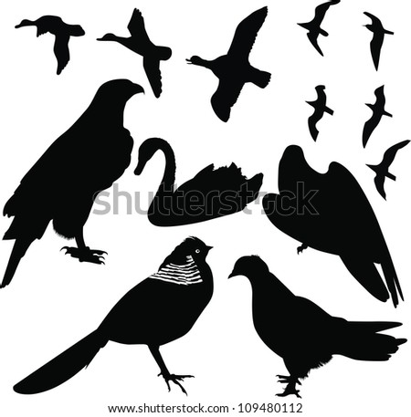 birds vector isolated on white background - stock vector