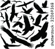 Birds with open wings silhouettes collection 02. Fine vector image - stock vector