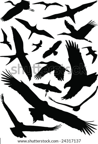 Birds with open wings silhouettes collection. Fine vector image - stock vector