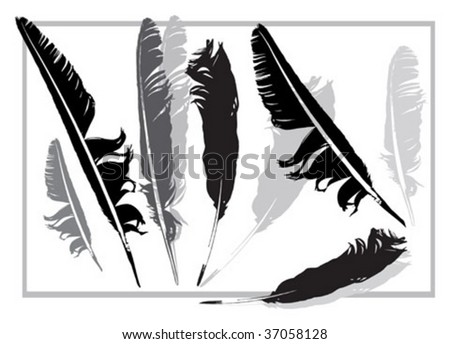 black and grey feathers