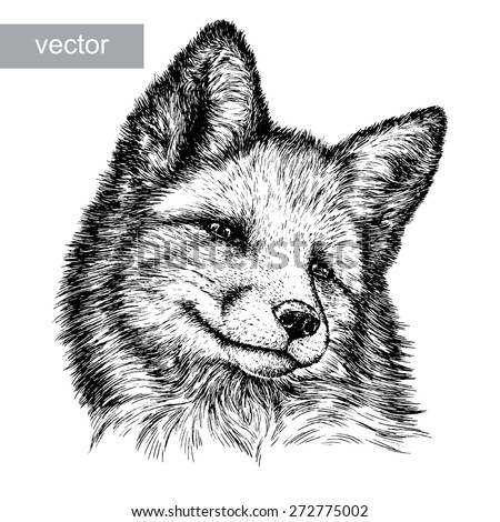 black and white engrave isolated vector fox - stock vector