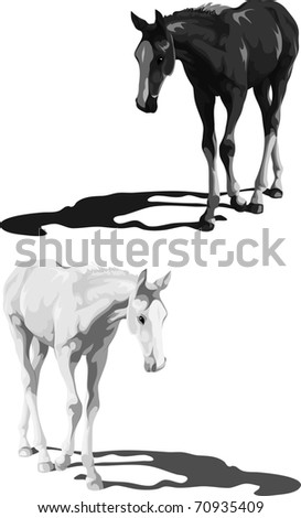 Black and white foals with shadows