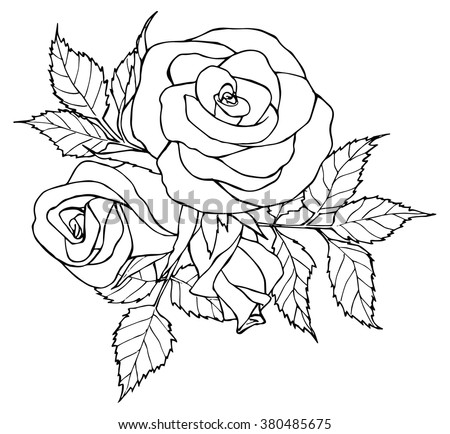 Black White Hand Drawn Illustration Roses Stock Vector HD (Royalty ...