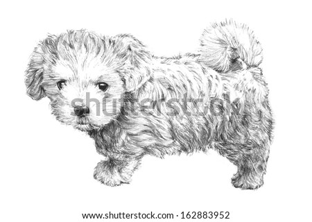 black and white hand drawn puppy dog vector - stock vector