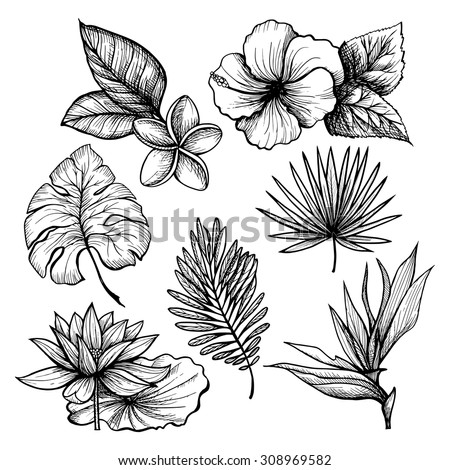 Black and white hand drawn tropical leaves and flowers set isolated vector illustration - stock vector