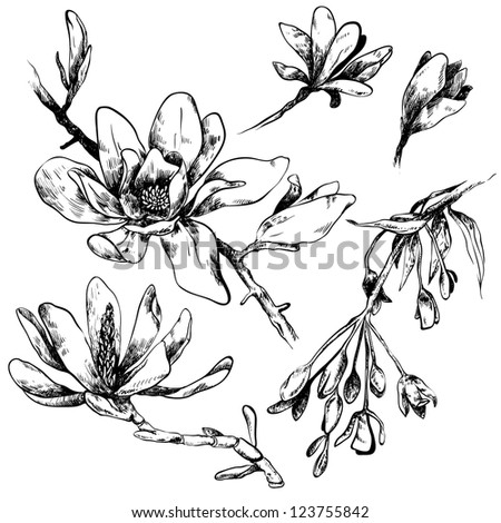 Black and white illustration of magnolia flowers