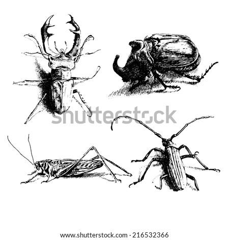 black and white illustration with different bugs (Oryctes nasicornis, Megopis scabricornis,  Lucanus  cervus)                   - stock vector