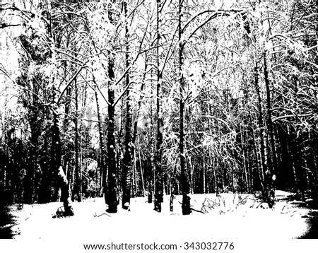 black and white image of a winter forest
