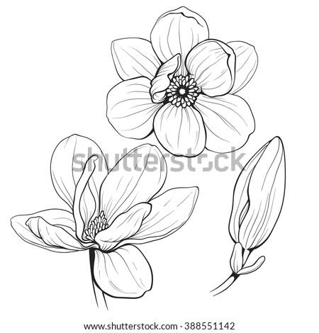 flower bud clip art