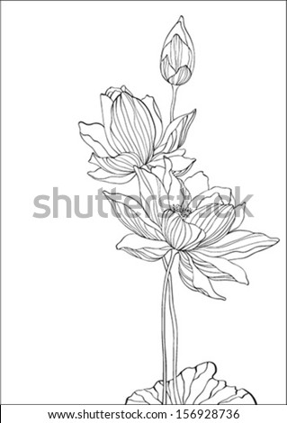 Black and white lotus - vector - on white background - stock vector