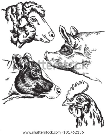 Black and white sketches of four farm animal's faces: sheep, chicken, pig and cow. Vector portraits. - stock vector