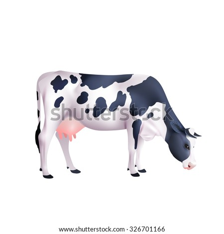 Black and white spotted cow lowered its head isolated on white background realistic vector illustration - stock vector