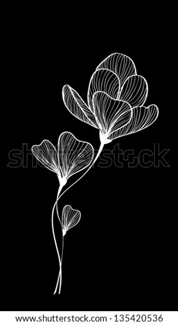 black and white tulip flower