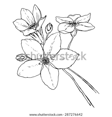 Black and white vector illustration of forget-me-not flowers