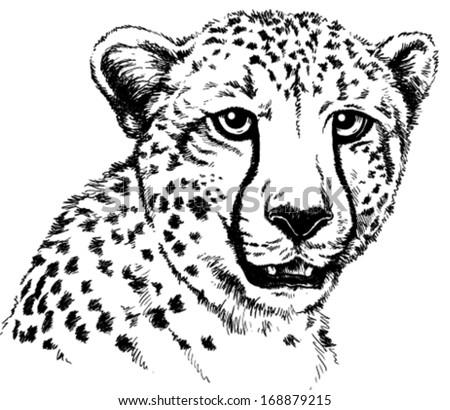 Black White Vector Sketch Cheetahs Face Stock Vector