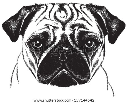 Black and white vector sketch of a fawn pug's face - stock vector