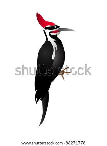 Black and white woodpecker with red head isolated on the white background
