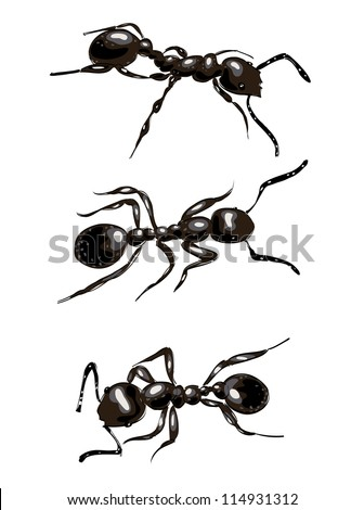 Black ants. Isolated on white background. Vector illustration. - stock vector