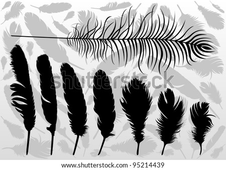 Black bird feathers illustration collection background vector - stock vector