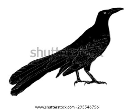 black bird isolated vector silhouette - stock vector