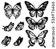 black butterflies isolated on a ...