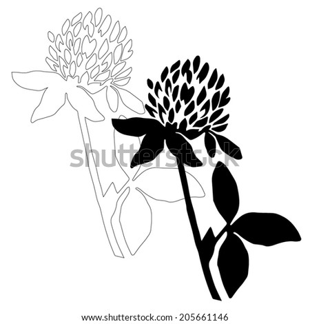 Black clover flower isolated on white background. Simple botanical illustrations set. Hand drawn sketch of a Trifolium. Line art and silhouette of a clover.  - stock vector