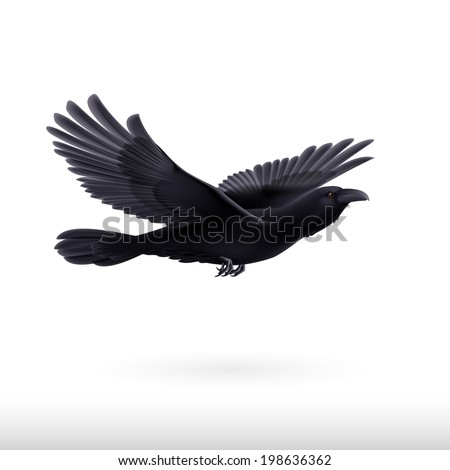Black crow precipitously flying on the white background - stock vector